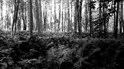 Aretherra Forest